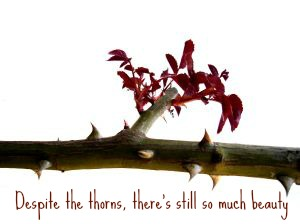 despite the thorns there's still so much beauty